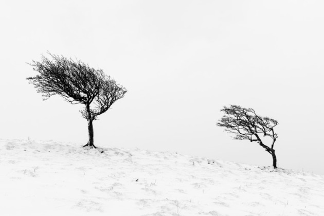 tree-0907