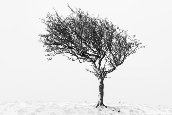 tree-0913-Edit