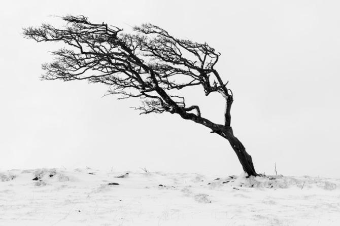 tree-0925