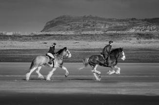 heavy horse-4249