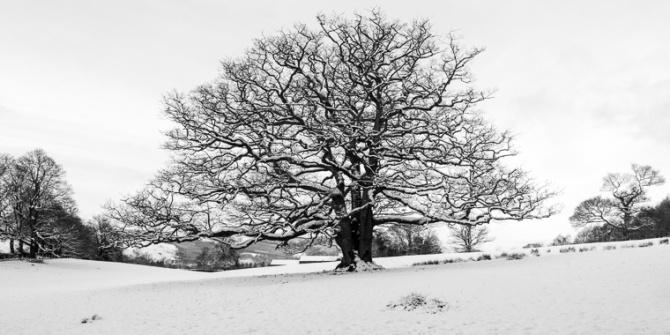 tree-6741-Edit-2