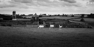 moreland_close_farm-9539