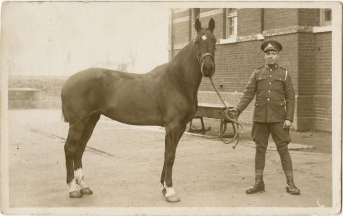 horse391