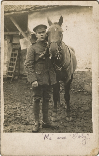 horse392